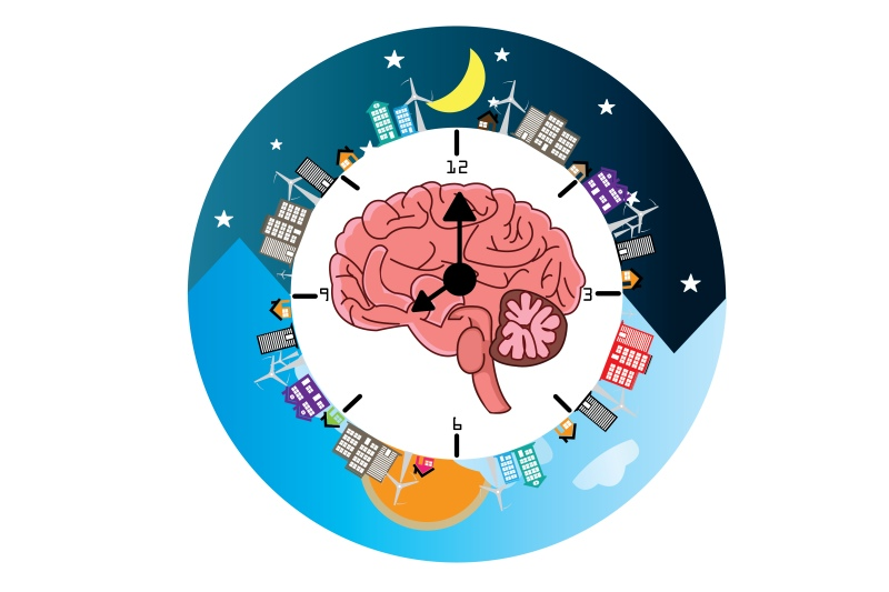 Cyklus spánku